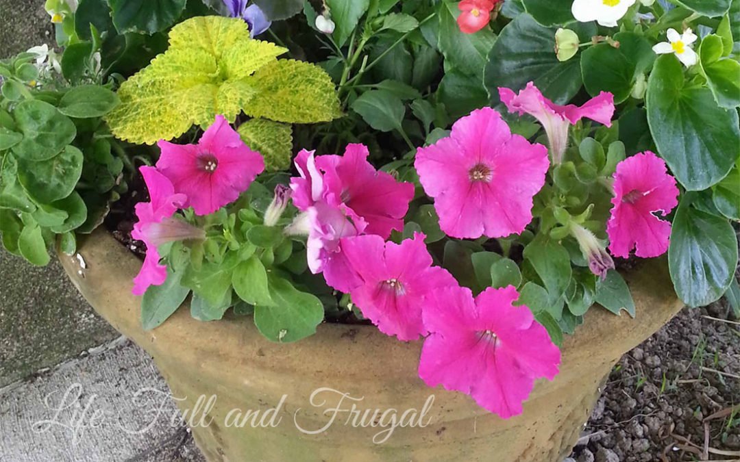 Beautiful Mixed Flower Pots on a Budget
