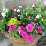 Beautiful Mixed Flowerpots on a Budget - Life Full and Frugal