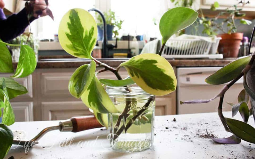 How to Create Hanging Baskets from House Plant Cuttings