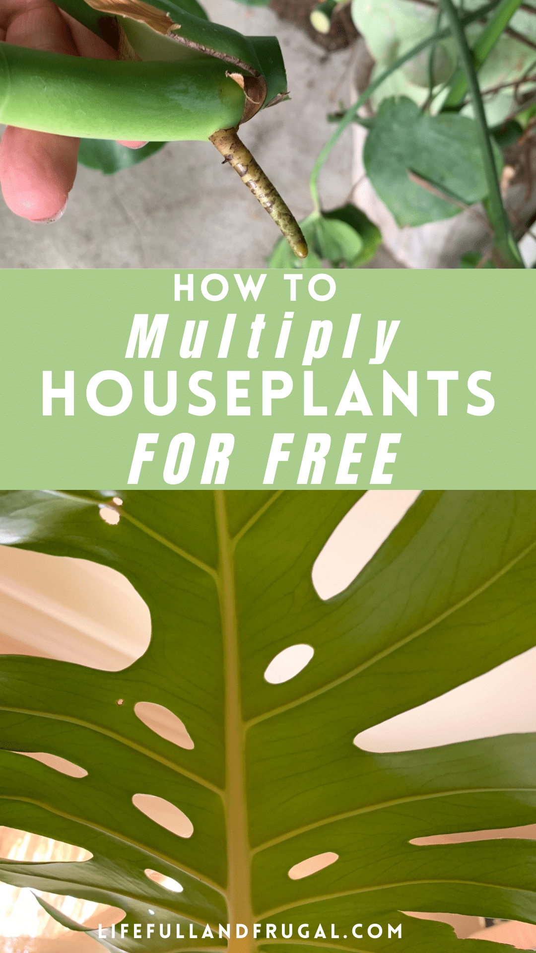 how to multiply houseplants for free pin life full and frugal