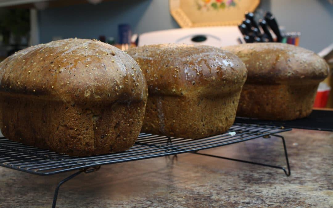 How to Make Sourdough Bread: A Multigrain Sandwich Loaf