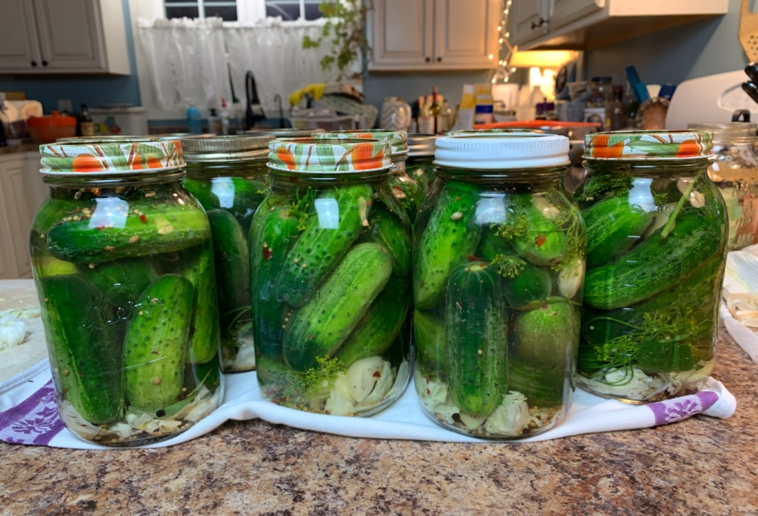homemade lacto-fermented dill pickles life full and frugal