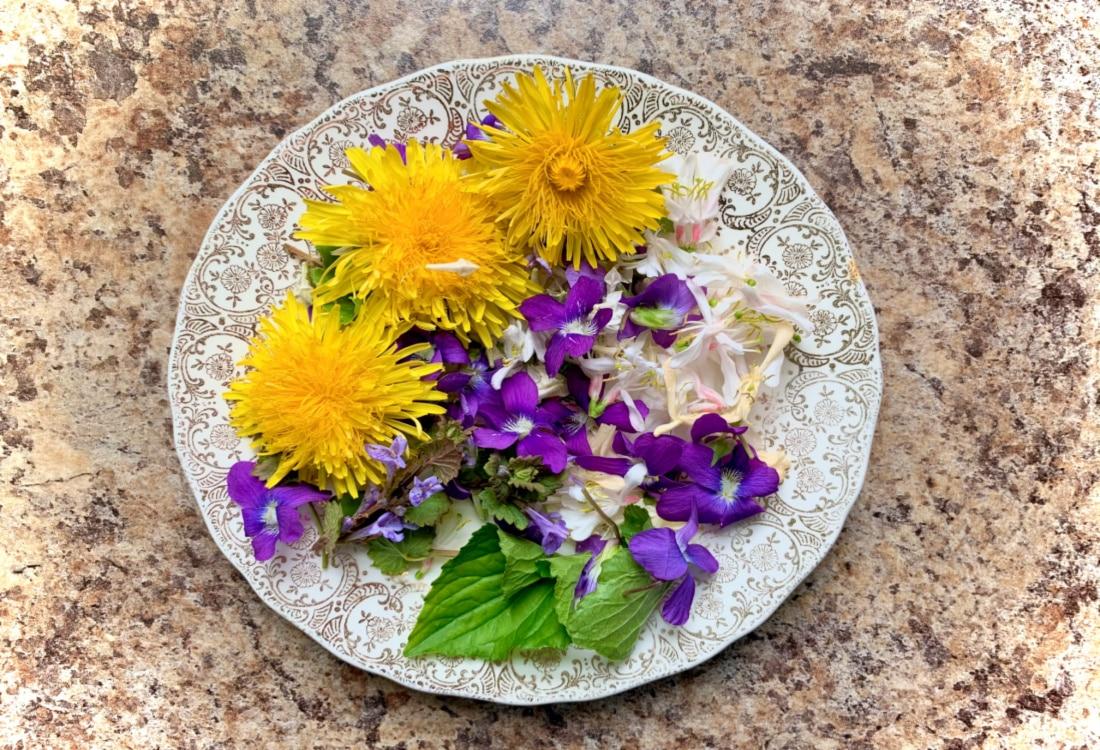 foraged dandelion violet ground ivey and honeysuckle